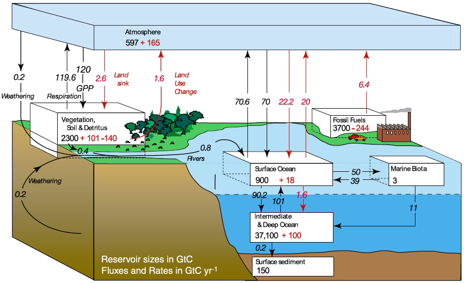 won't the carbon sinks absorb the extra co2? – jean-marc ... transformation diagram carbon #2